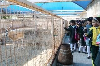Arman Zoo